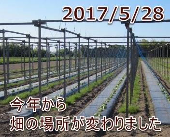 2017/5/28 今年から畑の場所が変わりました