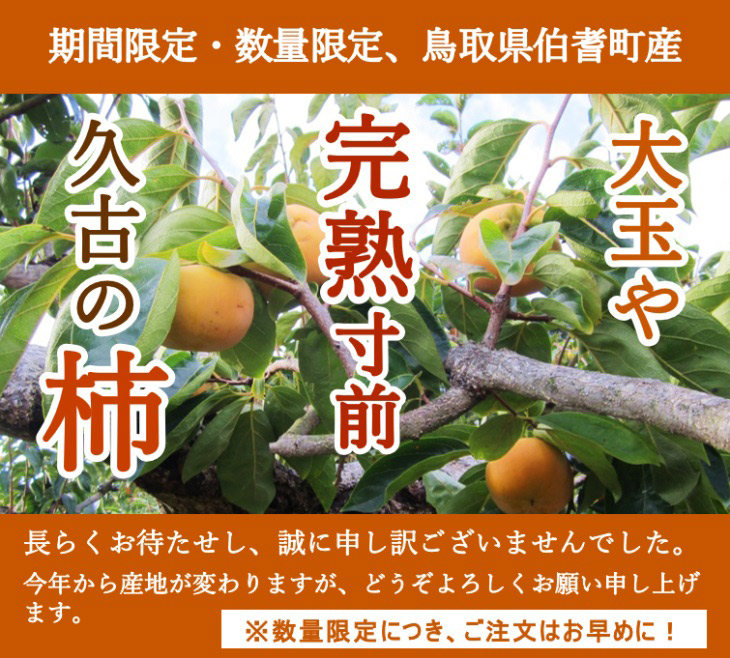 久古の完熟寸前 大玉富有柿